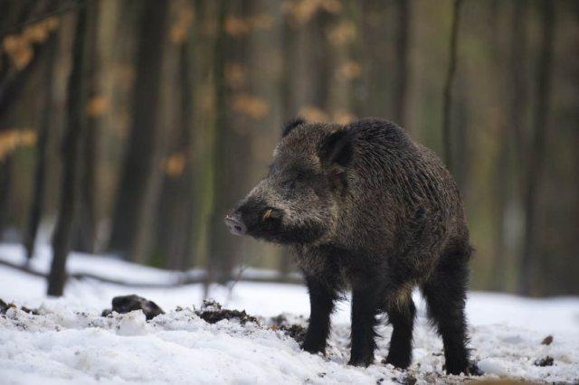 Приманка (Прикормка, кормовая добавка) для охоты на животных